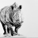 A majestic Rhino, solid and beautiful - capturing a moment with this endangered species