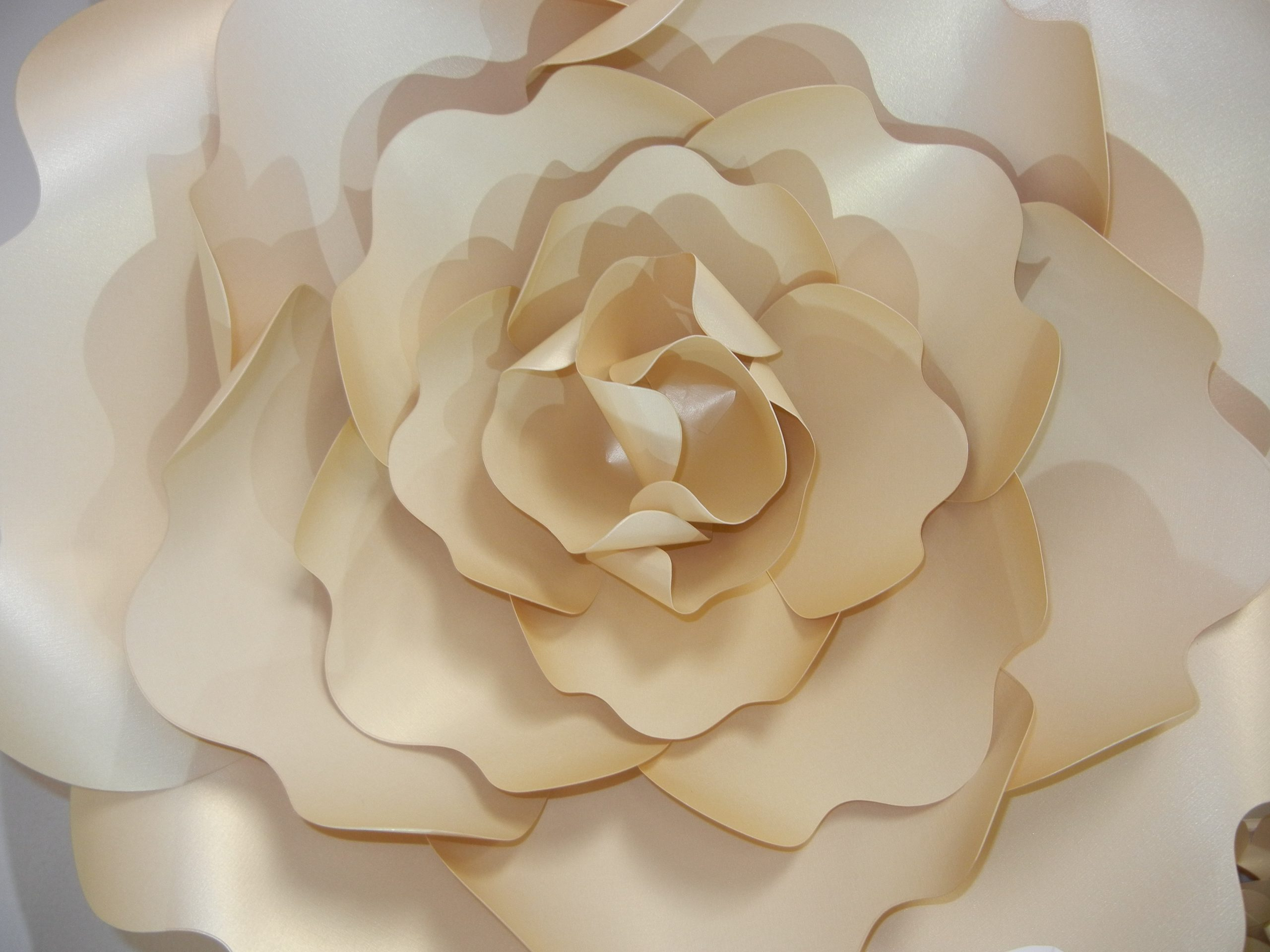 3D Paper flower wonder wall collection and sculptures Art People Gallery