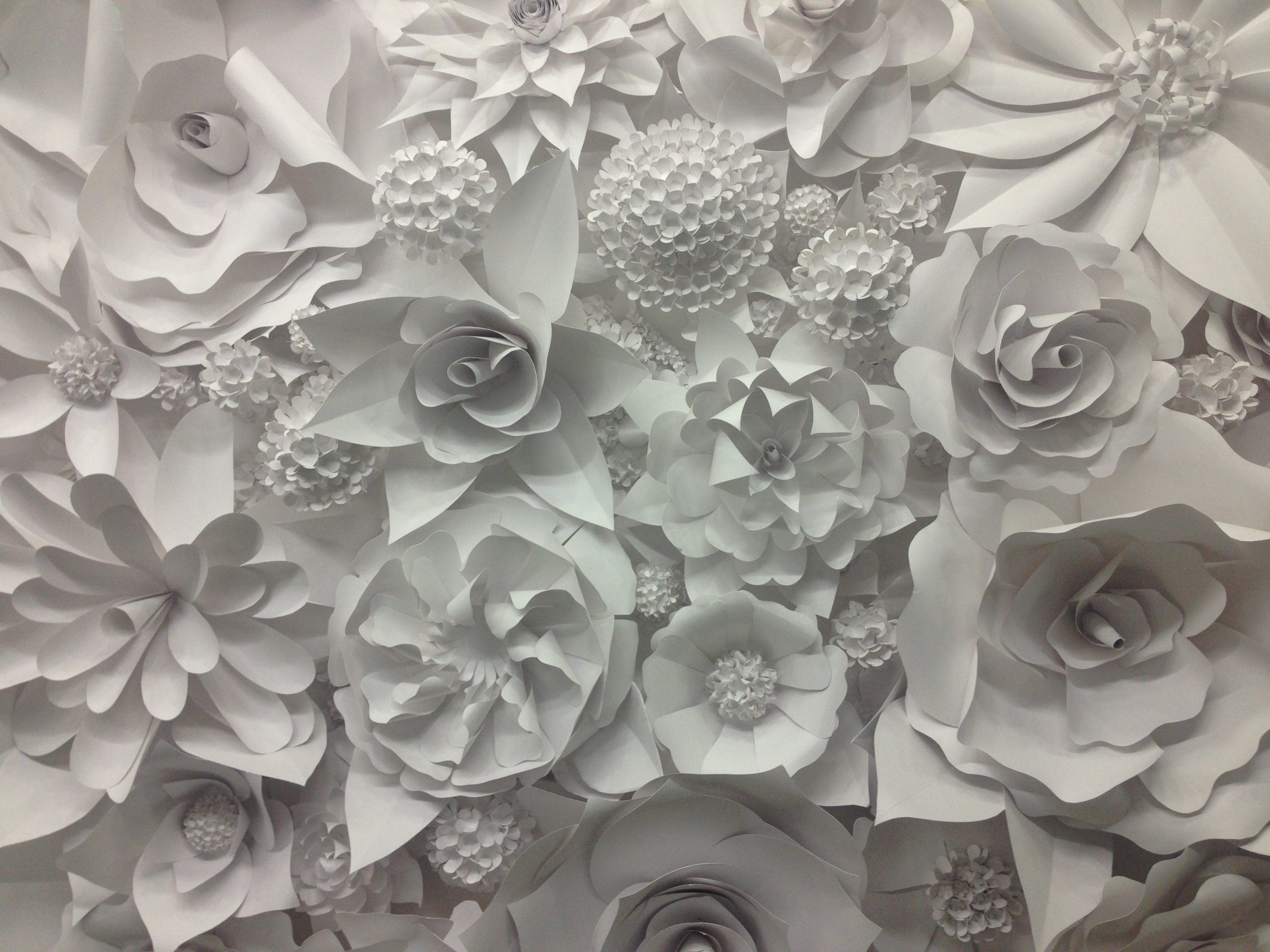 3d paper flower wonder wall collection and sculptures