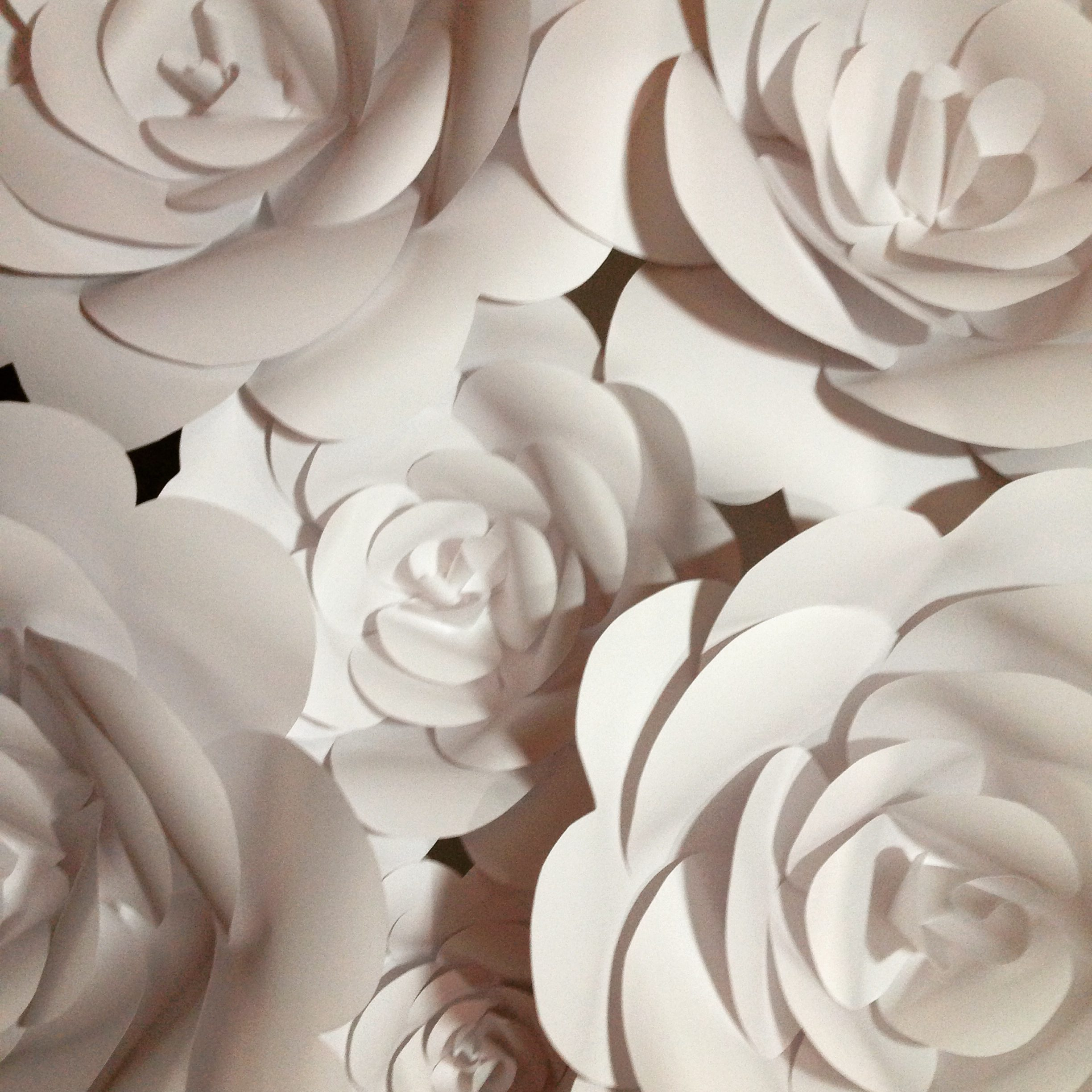 3D Paper flower wonder wall collection and sculptures Art People