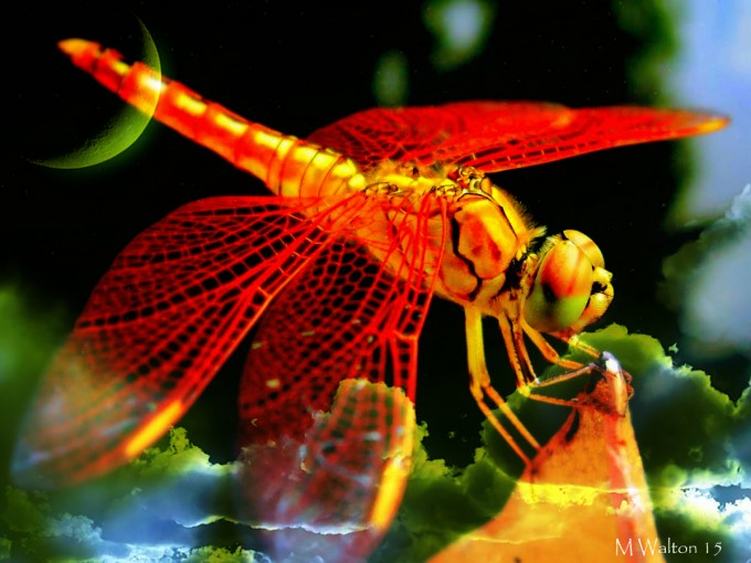 Night of the Dragonfly