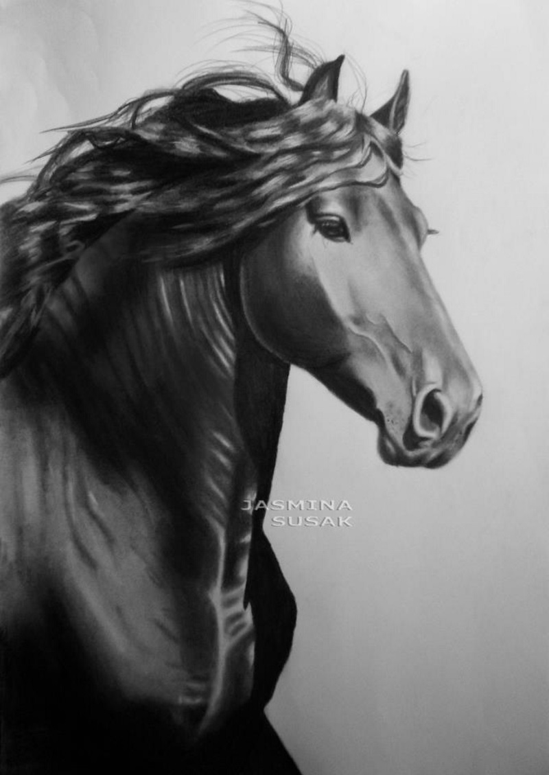 realistic graphite and colored pencil drawings by jasmina