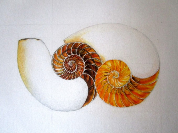 Name: Shells, Technique: pastel pencils, Author: Irene M. Gironacci