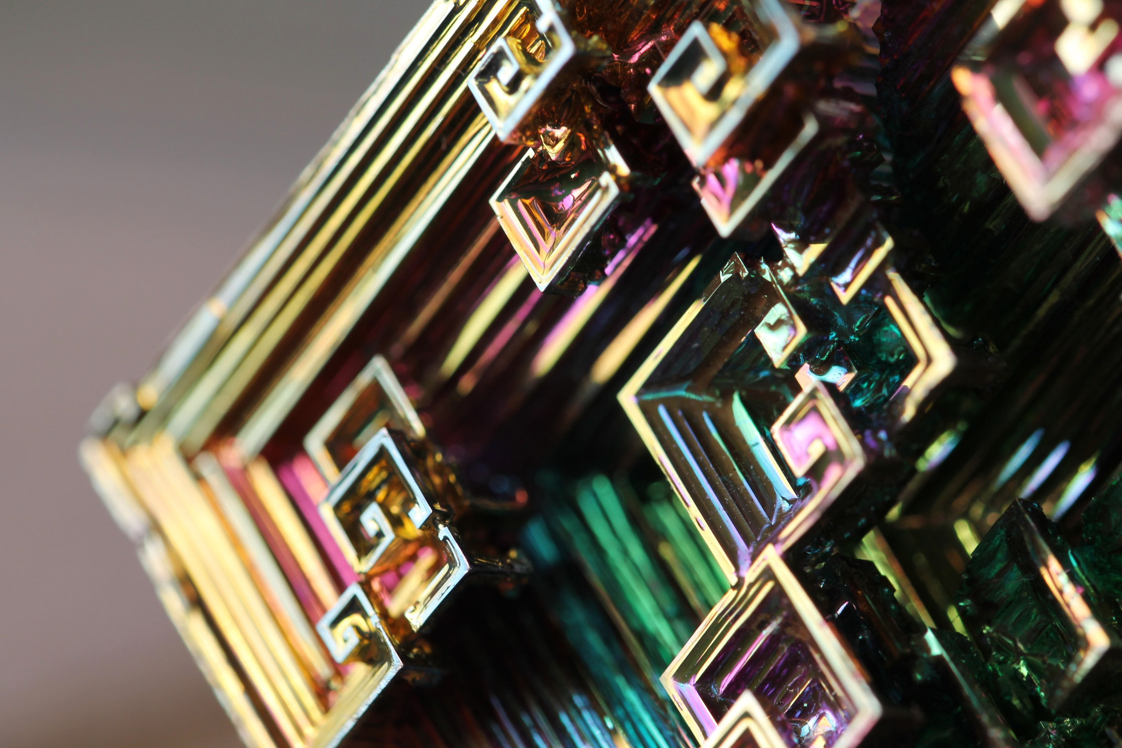 Gallery Space Design Macro Photography of B...