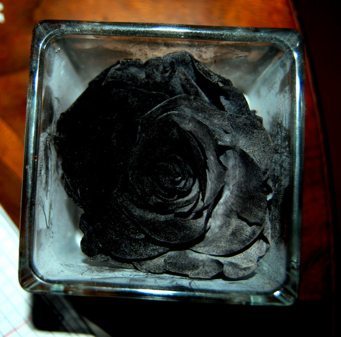 black rose in Paris