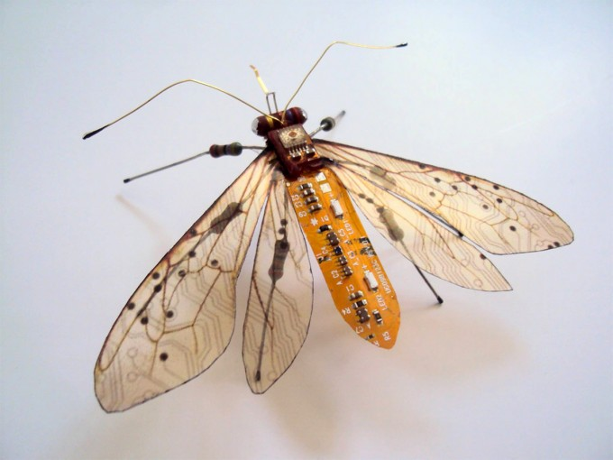 insect-1