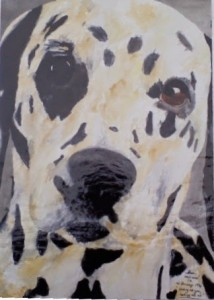 Pet portrait of a dalmation dog - watercolours on paper - by Kelly Goss