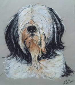 Pet portrait of a maltese terrier dog - soft pastels on textured paper - by Kelly Goss