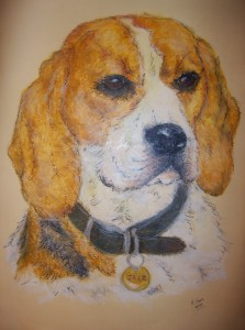 Pet portrait commission of a beagle dog - oil pastels on textured paper - by Kelly Goss