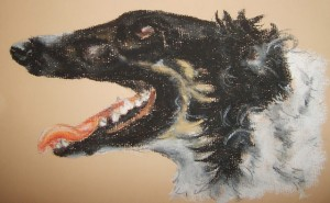 Pet portrait of a borzoi dog - soft pastels on textured paper - by Kelly Goss
