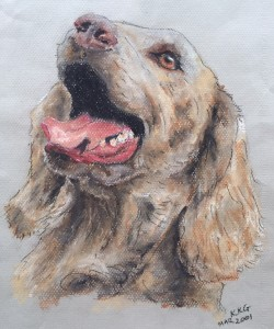 Pet portrait of a weimaraner dog - soft pastels on textured paper - by Kelly Goss