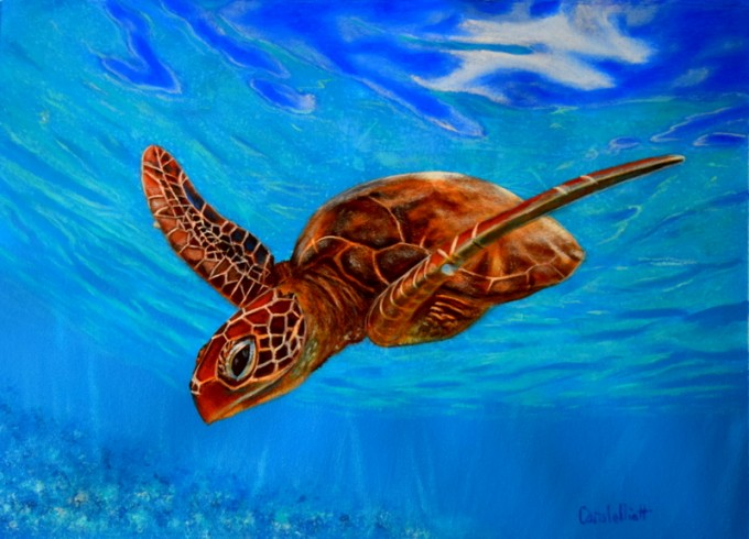 Carole elliott artist seascapes and marine life art for Sea life paintings artists