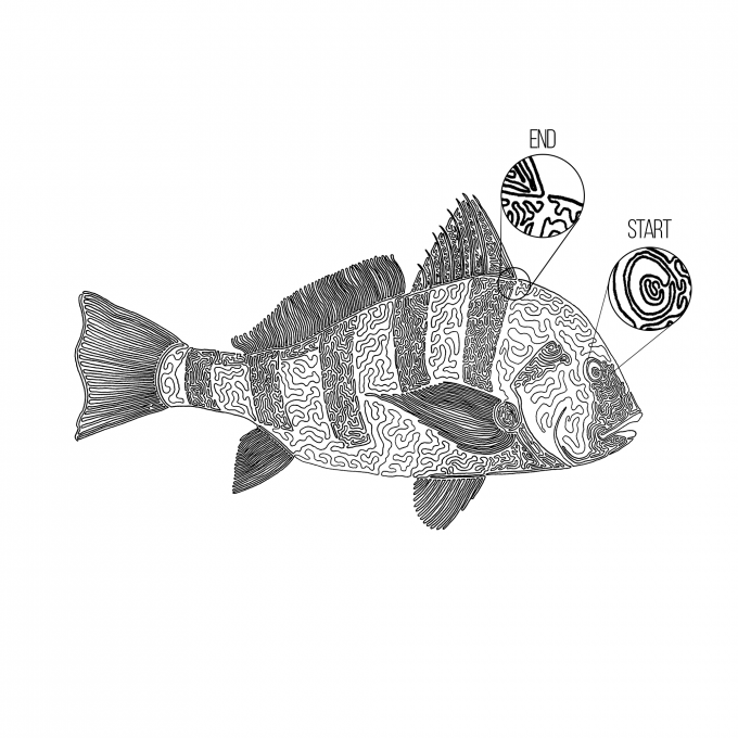 A black drum drawn with one line. the start and end points are called out in the photo.