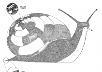 Snail drawn with one line, the start and end points are highlighted.