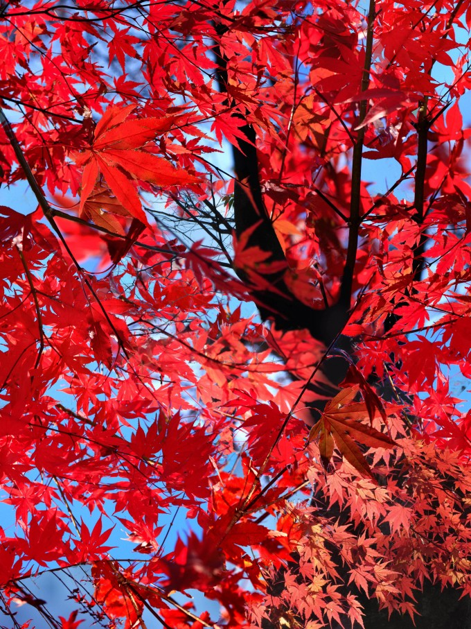 photo montage travel art photography leaves autumn red blue black tree