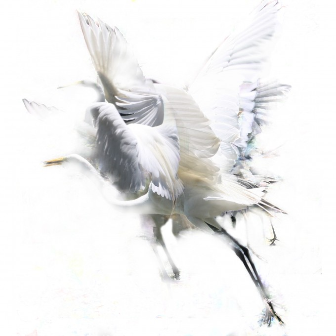 photography photo montage travel art cranes white bird feathers