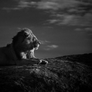 Africa Inspiration By Laurent Baheux