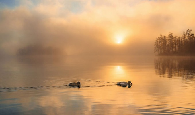 another-magical-sunrise-at-lake-bled-in-slovenia-9__880