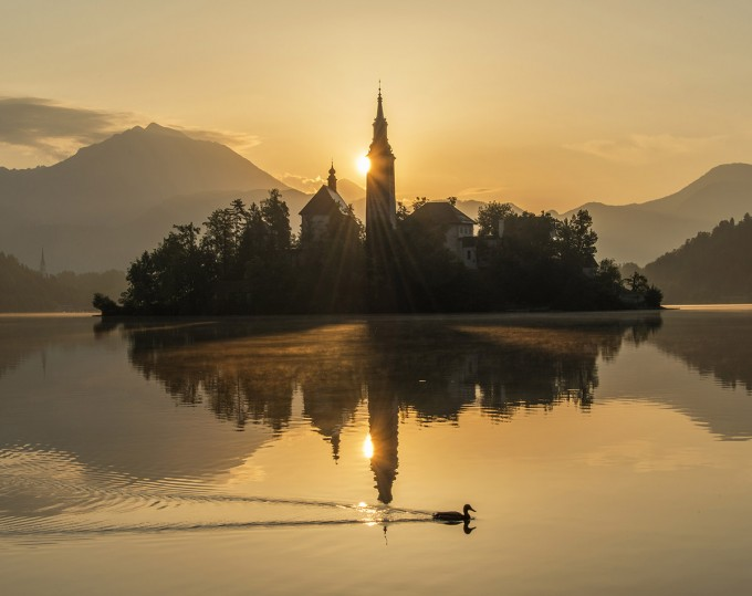 mystic-sunrise-at-lake-bled-with-duck