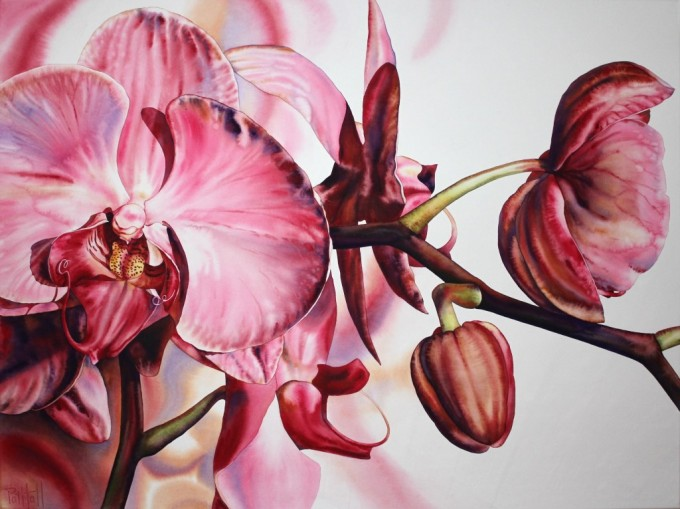 PINK ORCHID 122 x 91 cm