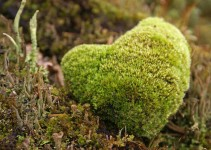 Natures-mossy-heart