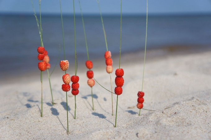 land_art_wildberry_sea_sm
