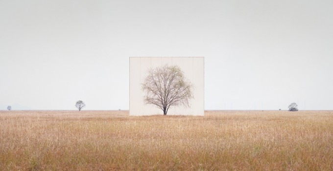 large-myoung_ho_lee-tree_3-2013