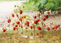 wildberries_land_art_river_sm