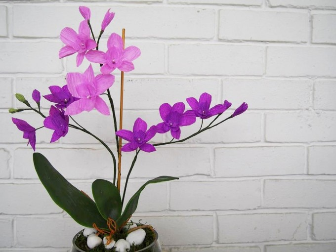 The exotic and graceful orchid.