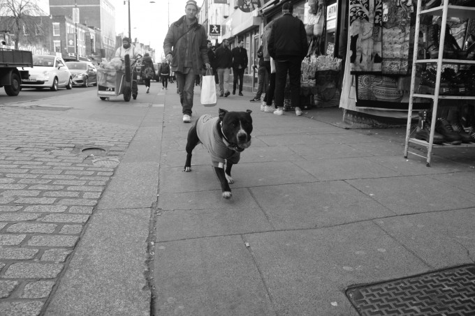 A dog and his owner are going to play, London.