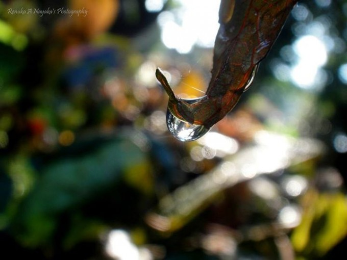 Drop'O'Graphy : Magic of Drops & Photography.