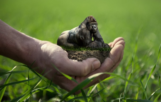 Save the gorillas.Visual effects photography #artpeople