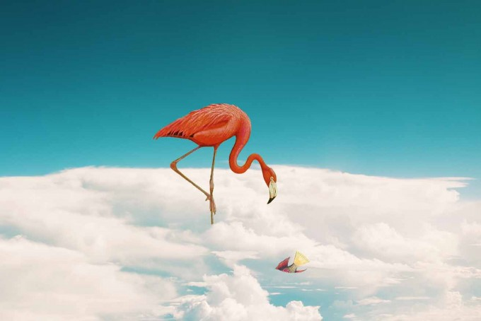 Flamingo.MARIA COUTINHO: IMPOSSIBLE LANDSCAPES