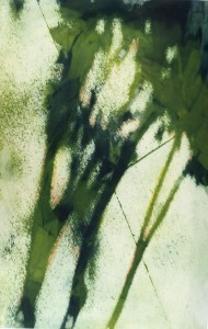 green tree branch shadow