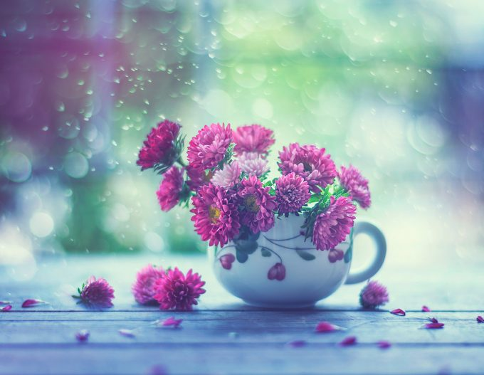 Cup of spring,Flower photography series | Ashraful Arefin