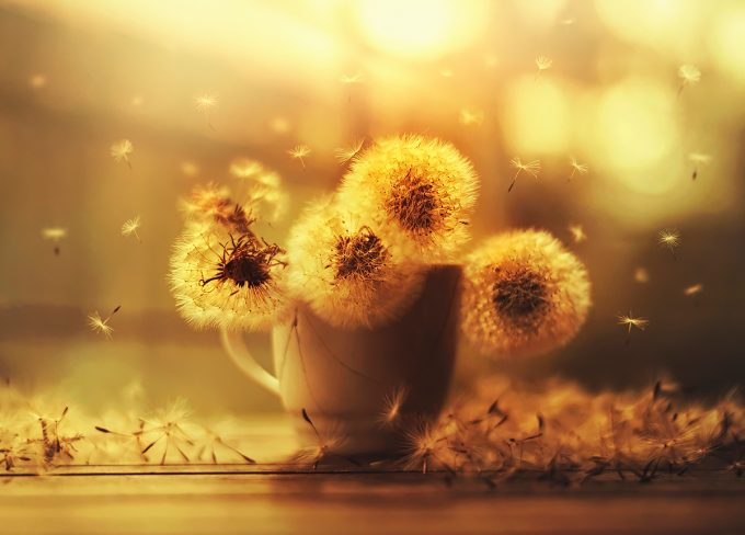 Wishful,Flower photography series | Ashraful Arefin