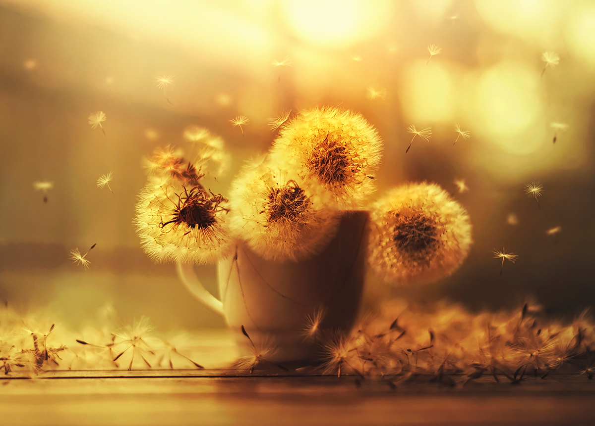 flower photography series  ashraful arefin  art people gallery, Beautiful flower