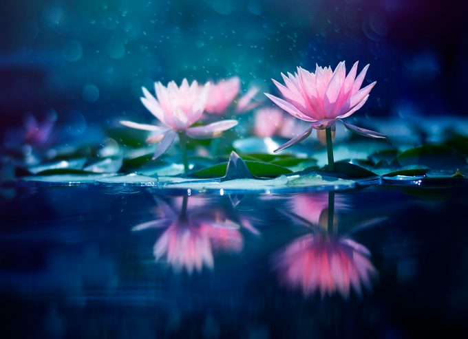 Moment in time,Flower photography series | Ashraful Arefin