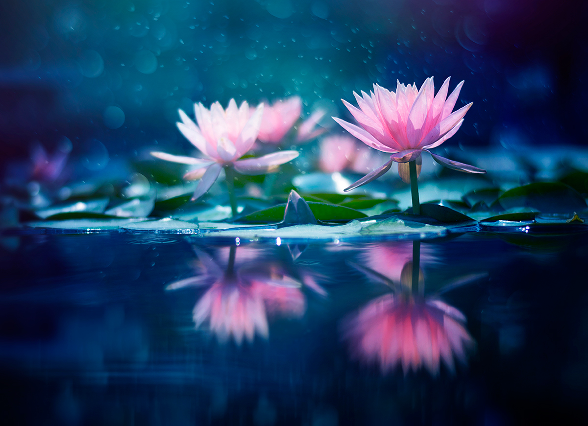 Flower Photography Series Ashraful Arefin Art People Gallery