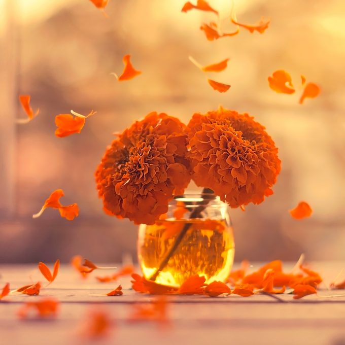 Marigold days,Flower photography series | Ashraful Arefin