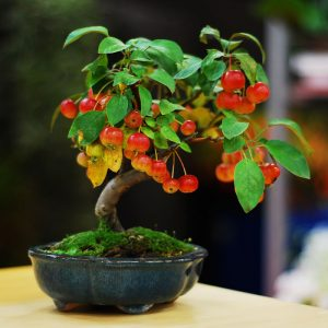 Beautiful Bonsai Trees