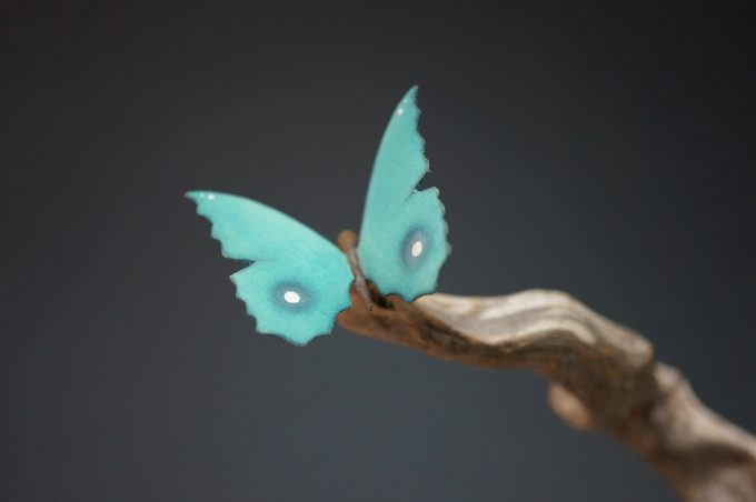 Turquoise Butterfly on Driftwood