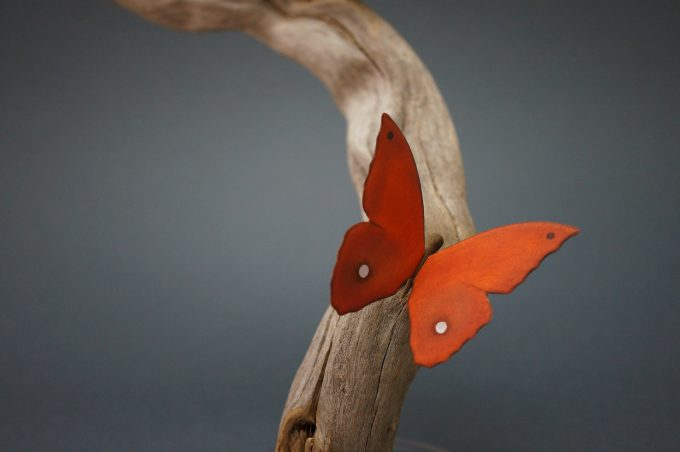 Orange Butterfly on Driftwood