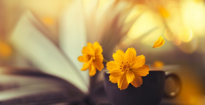 Still life flower photography by Ashraful Arefin