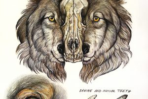 Nature and Tales | Carol Wellart