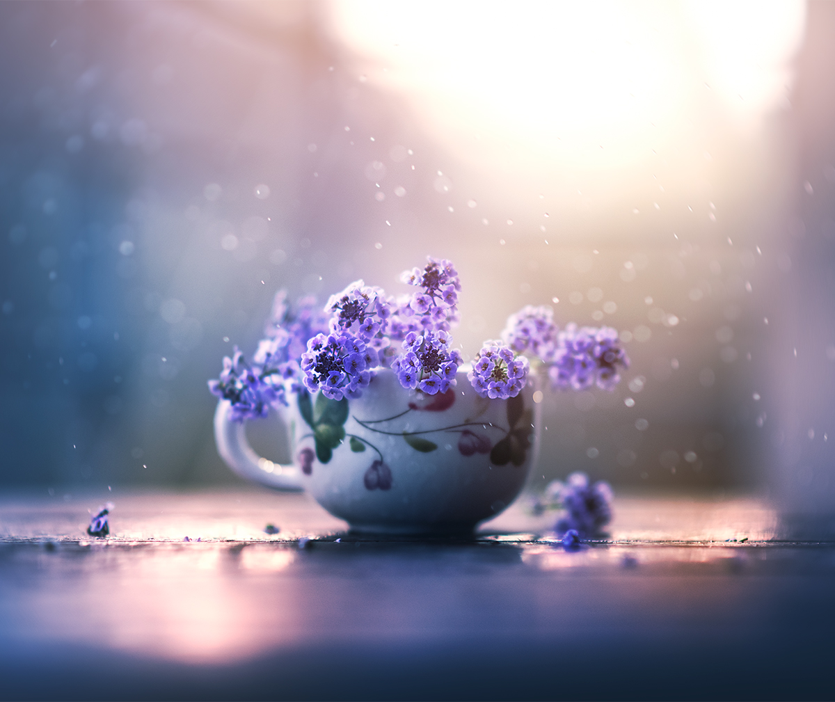 Still Life Flower Photography By Ashraful Arefin Art People Gallery