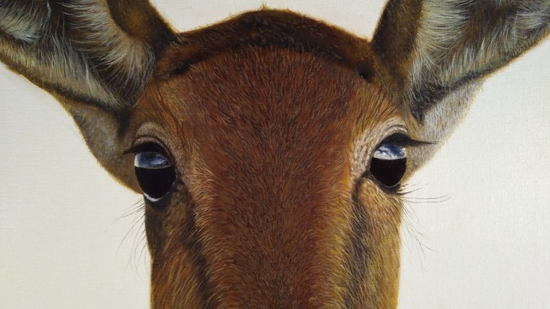 Antelope painting, detail