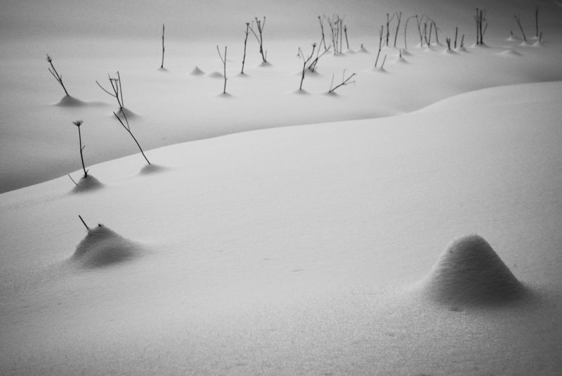 Dynamic Landscapes in the World of Black and White