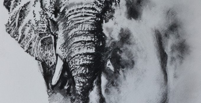 Charcoal drawing of an Elephant