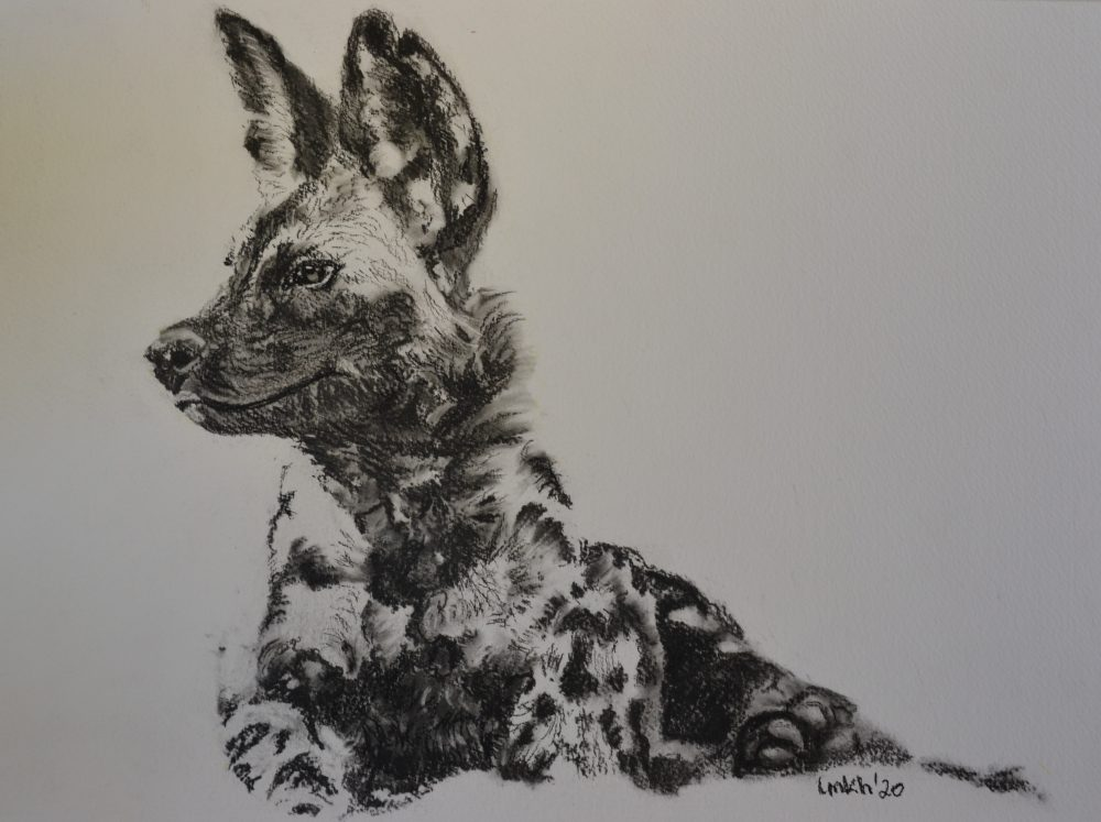 Charcoal drawing of a Painted wolf